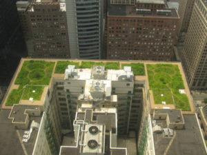 The City of Chicago recognized the positive environmental impact of a green roof-- and installed one on City Hall!