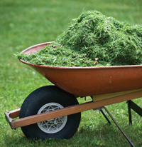 Front of wheelbarrow with grass clippings