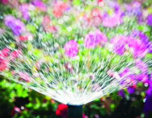 Smart watering makes use of automatic water sprinkler to ensure watering is done at the best time of day