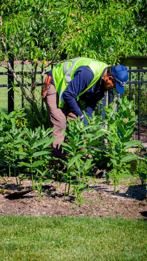 Greenwise Natural Weed Management