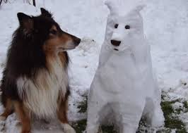 Collie looking at snow dog wondering about our Value Pass Snow Clearing Package