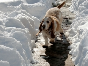 Keep your snow safe for dogs