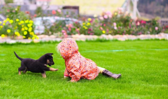 Don't you want your dog to have a safe lawn?