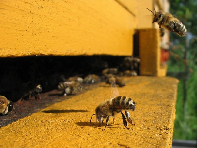 """Even """"safe"""" doses of common agriculture pesticides may be causing severe learning and memory deficits in honeybees."""