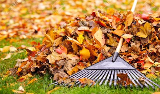 image of leaves and rake