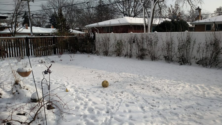 snow-covered lawn