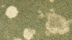 Snow Mold circles
