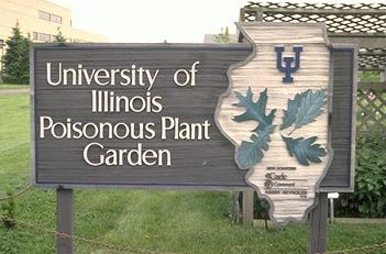 Toxic Plants Guide To Common Poisonous Midwest Garden